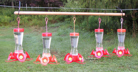 How To Keep Ants Out Of Your Hummingbird Feeders
